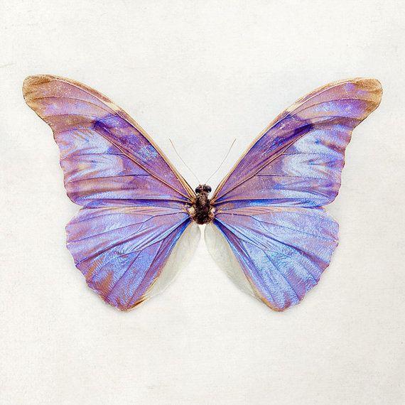 Purple Butterfly Print Nature Photography door EyePoetryPhotography, $30.00