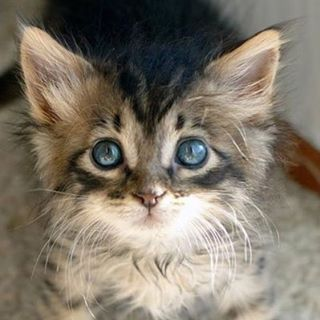 Time for a really cute kitten!