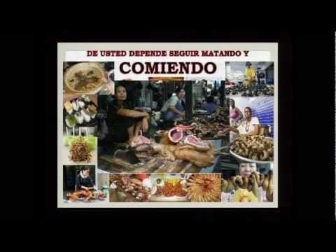 LA_VISION_DE_PEDRO_KEFA_Y_SU_REAL_SIGNIFICADO_EN_HEBREO_D4_2012