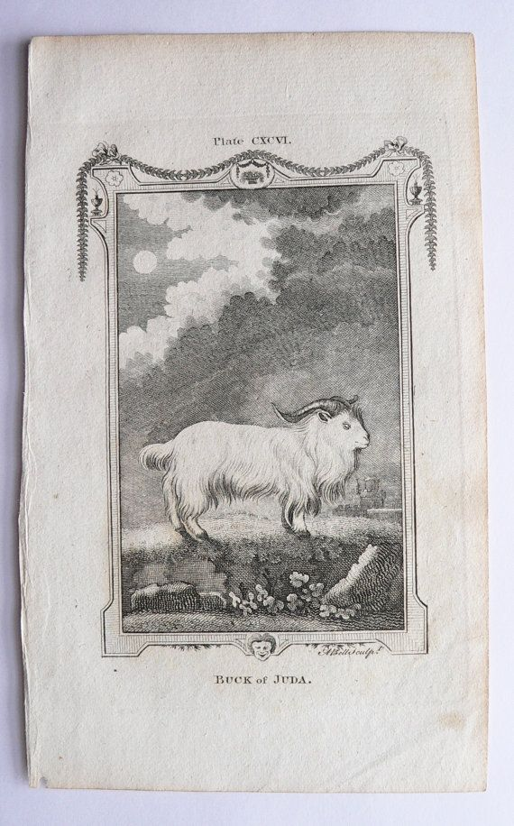 1791 Buffon Engraving, Antique Goat Engraving Ram, Buck of Juda, Original Vintage Farm Animal Art for Groupings, Gift for Home Decor available from OldMapsandPrints.Etsy.com #AntiqueBuffonEngraving #SheepPrint #FarmAnimalArt
