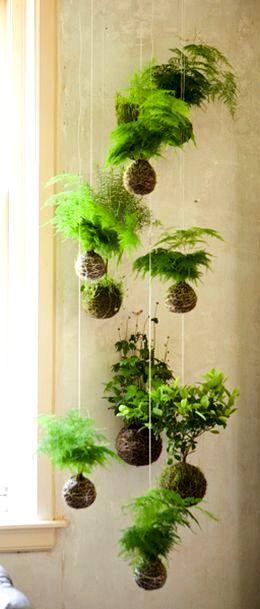 Kokedama - függőkert a lakásban A japánok évezredek óta egy külön művészeti ágként értelmezik a kertészetet, így a lehető legkülönlegesebb alkotásokat hozzák létre a növények felhasználásával. A 17. századra tehető a kokedama első megjelenése, amely magyar nyelven mohagömböt jelent, és arra az élő virágcserépre utal, amellyel beborítják a növény gyökérzetét a kiszáradás ellen.