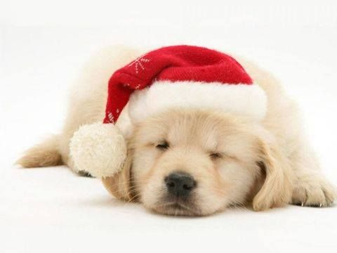Awwww.....he would make a great Christmas surprise under the tree!