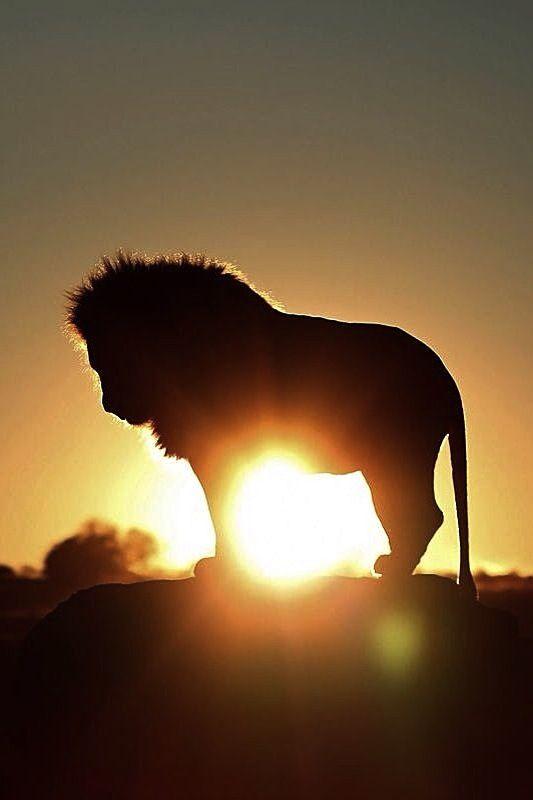 WILD LIFE, NO CAGE LIFE!!!! CAPTIVITY IS CRUEL, BOYCOTT ZOO & CIRCUS. Se ami le immagini di questa bacheca NON ANDARE AL CIRCO oppure ALLO ZOO perché gli animali NON DOVREBBERO ESSERE IN QUEI LUOGHI ma liberi in natura.
