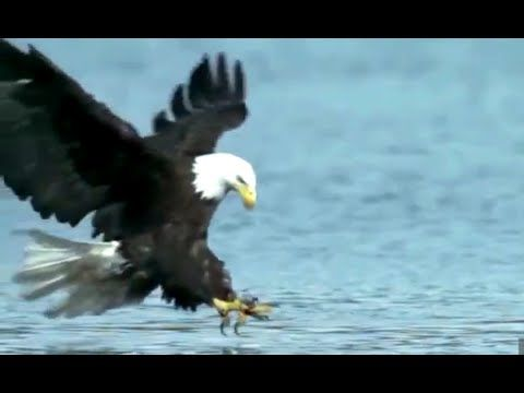 FLY EAGLE FLY...My Tribute to American Eagles - YouTube