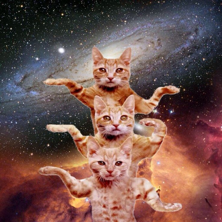 #Space #cats via @howkapow                                                                                                                                                                                 More