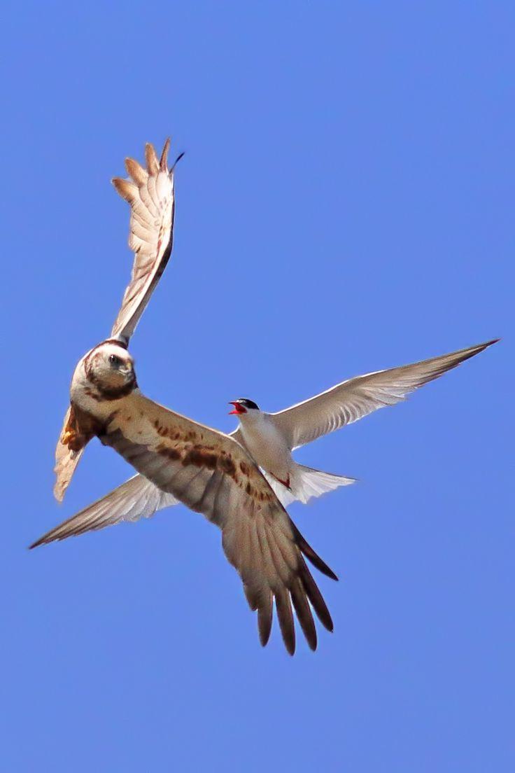 birdpx.com  Bu Savaşta Hiç Kimse Hiç Kimseden Üstün Değildir, Hele Birde Söz Konusu Yuva İse