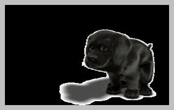 Cool Dog Tricks - Dog Fetch Beer | Dog Tips -- Read more details by clicking on the image. #DogTips #DogBarking