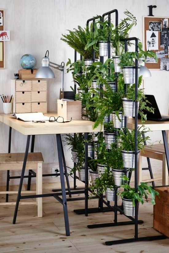 114 best decoración de interiores con plantas images on Pinterest - jardin interior