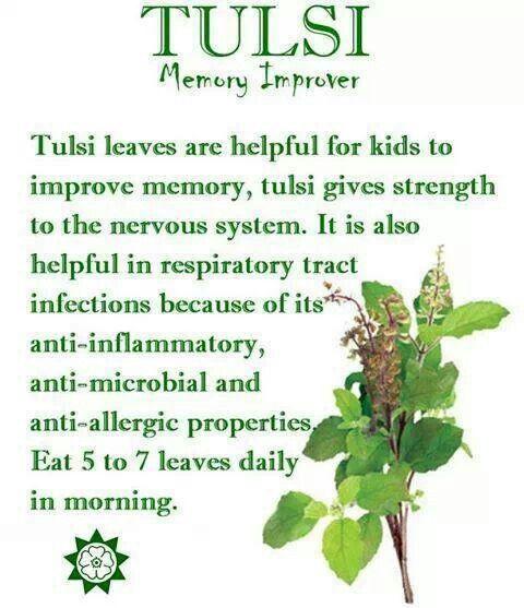 Tulsi Memory Improver | Health & Beauty Tips | Pinterest | Of ...