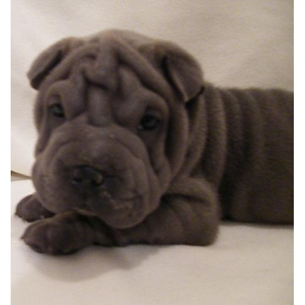 just 1 of my dream dogs SO CUTE!