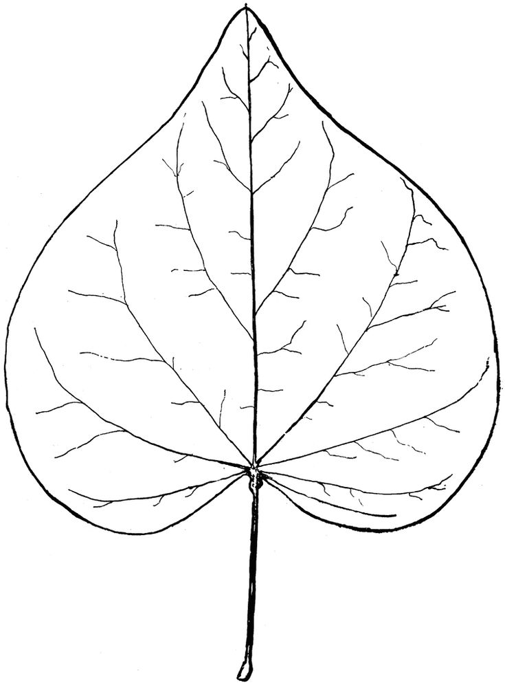 Line Art Leaves : Best free motion quilting images on pinterest