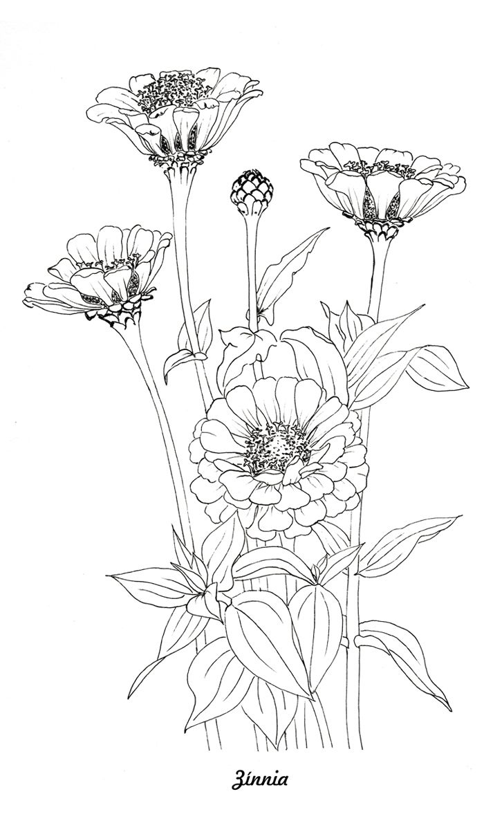 Soloring Pages For Adult Pdf Botanical Flower Illustrations