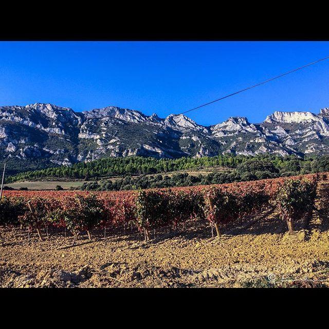 """Colores de 🍂 Otoño en La Guardia. Rioja Alavesa.  #paisaje #landscape #bodega #autumn #larioja #rioja #roadtrip #españa #spain #worldplaces #worldcaptures #photooftheday #blogbmartinma2015 #travelexperience #travelblogger #travelgram #travelphotography #traveltheworld #travelling #travellife #trip #mytravelgram #loves_cultures #winelovers #total_shot #ok_myworld #espacio_world"" by @bmartinma (Notas de Viaje Bmartinma). #turismo #instalife #ilove #madeinitaly #italytravel #tour…"