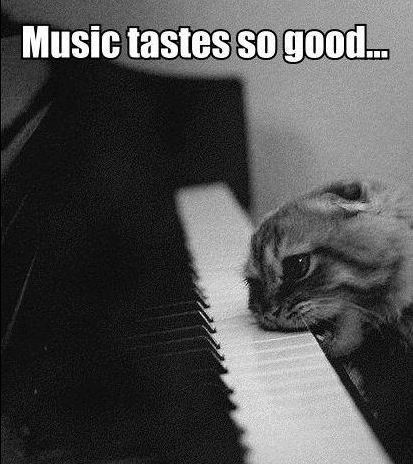 Music tastes so good! Especially if you're a kitty! #meme #cat #piano