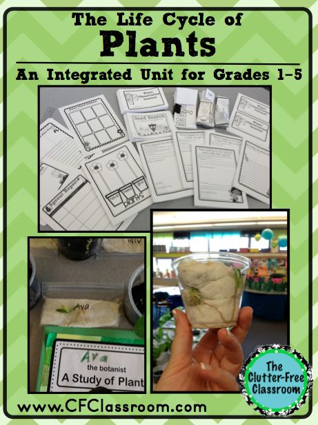 Life Cycle of Plants Flowers portfolio science lapbook journal thematic unit experiments hands on activities first second third fourth fifth...