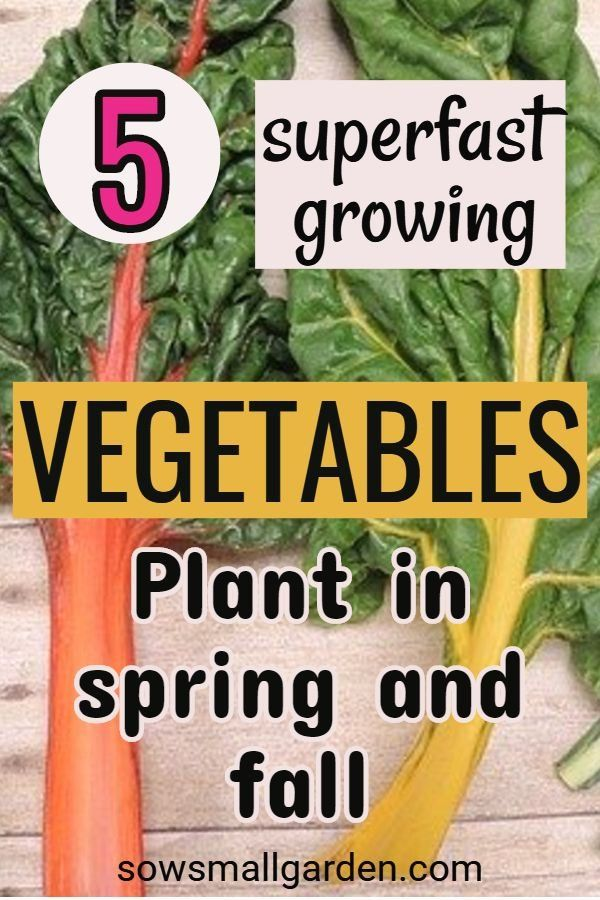 Super Fast Growing Vegetables To Plant In Spring And Fall 1000 Growing Vegetables Fast Growing Vegetables Planting Vegetables