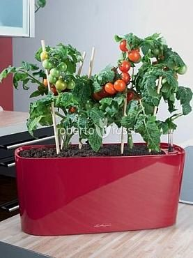 Natural Cherry Tomatoes in Pots Lechuza Delta Window