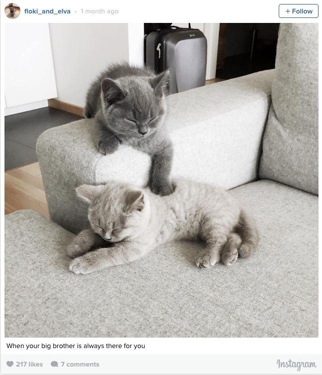 Non vorrete più un gatto in casa una volta viste queste 27 foto.   Il Mio Gatto Miao