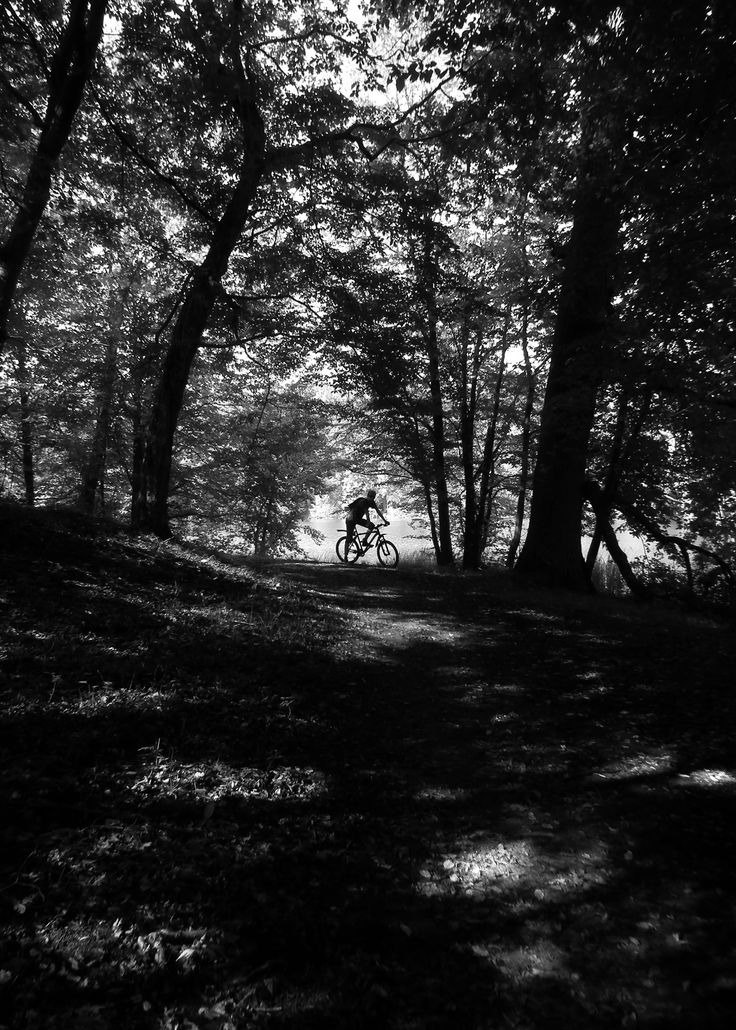 Bike in natural habitat #photography #bike #nature #wood #blackandwhite