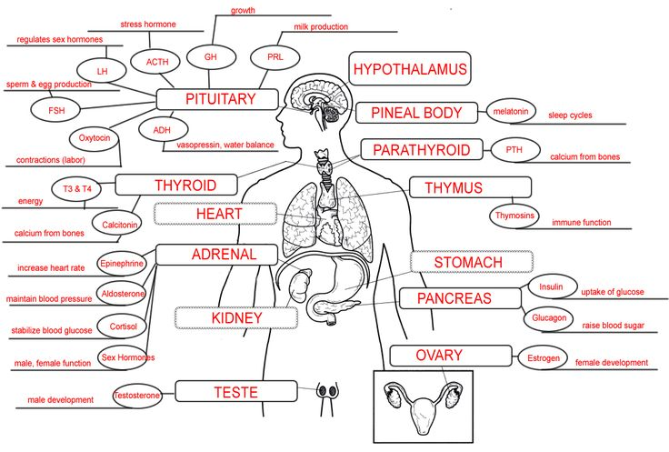 Endocrine System Diagram Worksheet Endocrine System Conce...