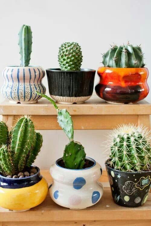 Cactus en macetas decoradas