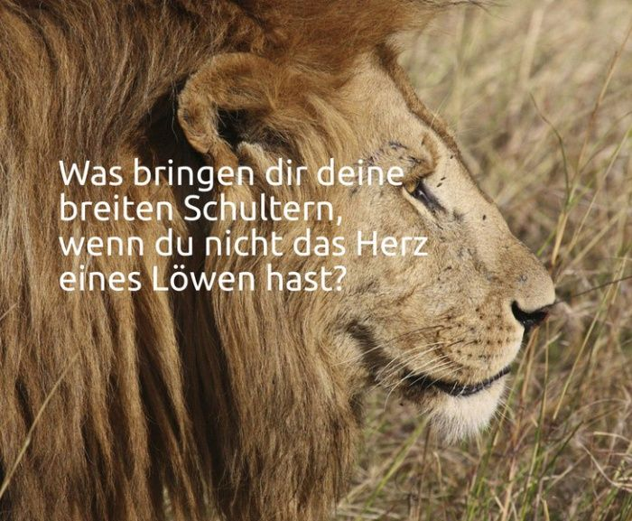 Was bringen dir deine breiten Schultern, wenn du nicht das Herz eines Löwen hast?