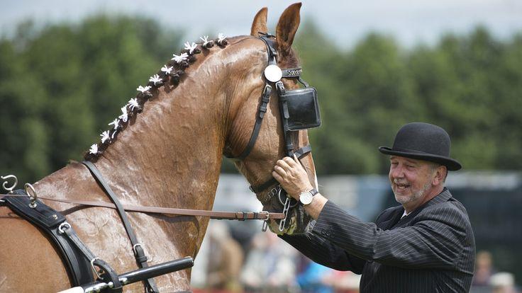 Paarden schitteren op het Concours Hippique Wachtum