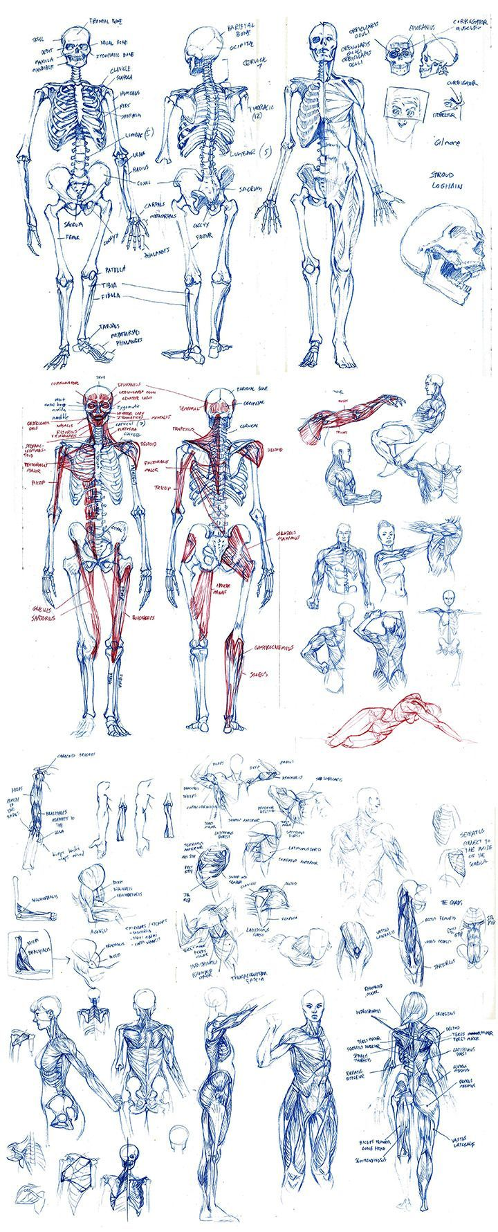 7 Drawing Tips For Beginners In 2018 Anatomia Pinterest