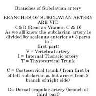 subclavian artery - Google Search