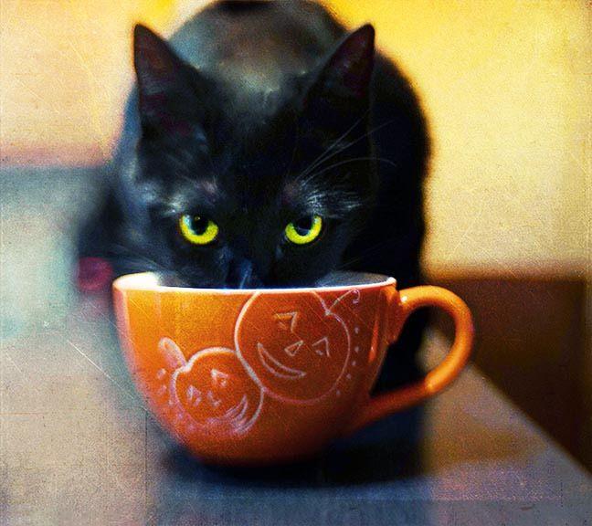 картинки доброе утро с черной кошкой отношения родителей были