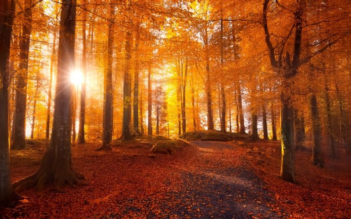 Download wallpapers autumn forest, trees, yellow leaves, autumn, sunset