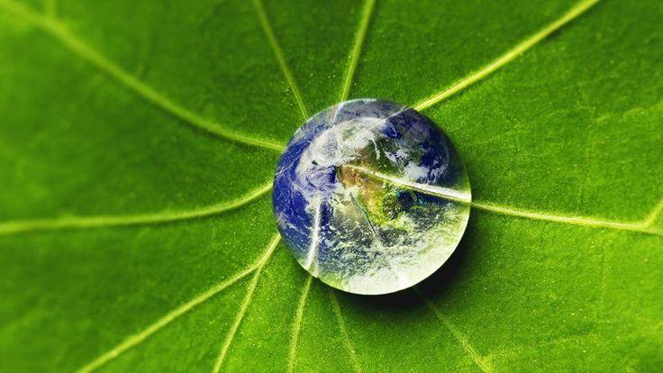 Video Umwelt Was Ist Uns Die Natur Wert Odysso Wissen Im Swr Natur Videos Pflanzen
