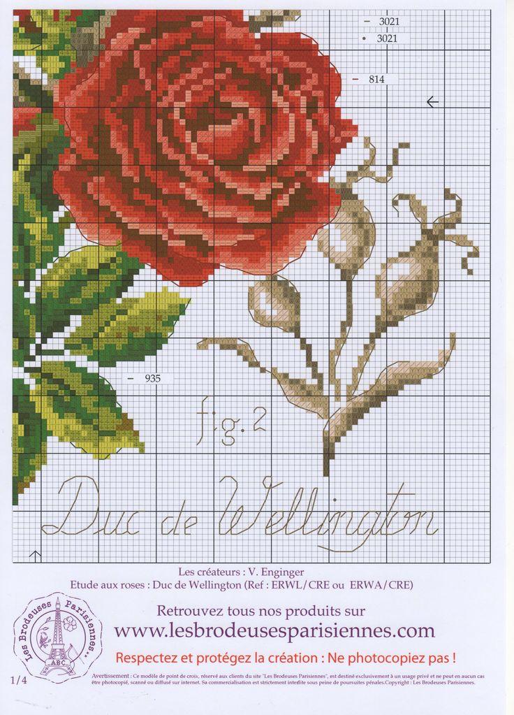Ботаник роза2