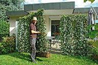 Mit schnell wachsenden Pflanzen einen Sichtschutz schaffen