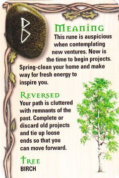 ☆ The Rune - Beorc - B - Birch - Tree ☆
