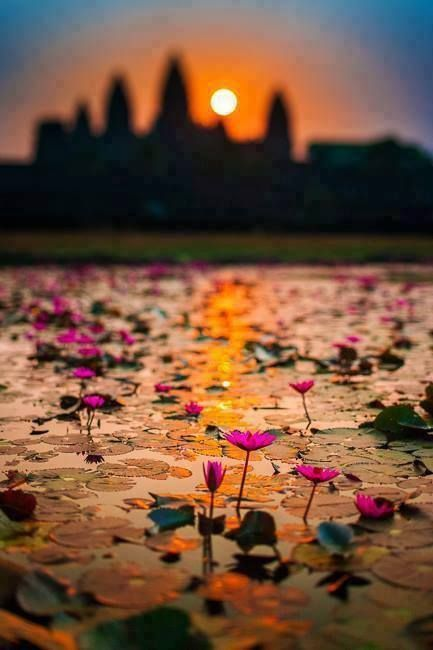 カンボジアのアンコールワットの風景。沼地に咲く蓮が立派すぎて・・・ A nice photography for a place saturated with pictures. Lotus reflection next to Ankor Wat