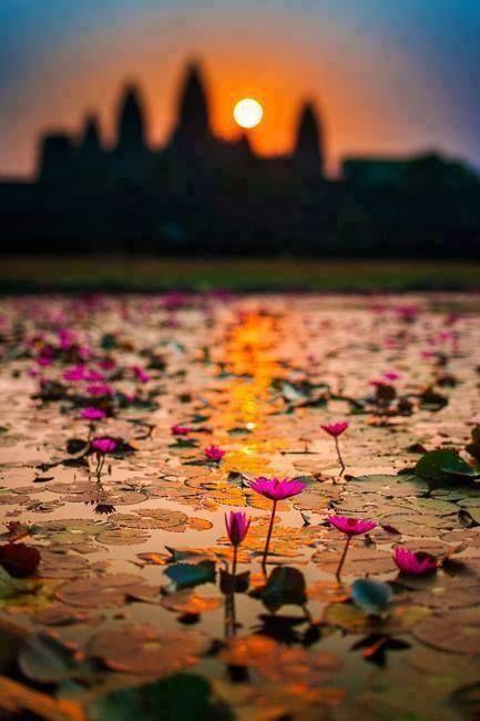 カンボジアのアンコールワットの風景。沼地に咲く蓮が立派すぎて・・・ A nice photography for a place saturated with pictures. Lotus reflection next to Ankor Wat
