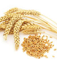Gluten-Free 101: What You Need to Know - Celiac Disease Foundation