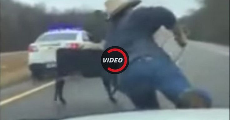 Cowboy Roping Calf From Cop Car Is The Most American Thing You'll See Today #Offbeat_News #Police_Cars