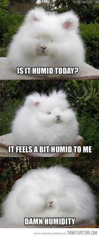 Too funny not to share! :): Animals, Giggle, Humid Today, My Life, Funny Stuff, Funnies, Curly Hair