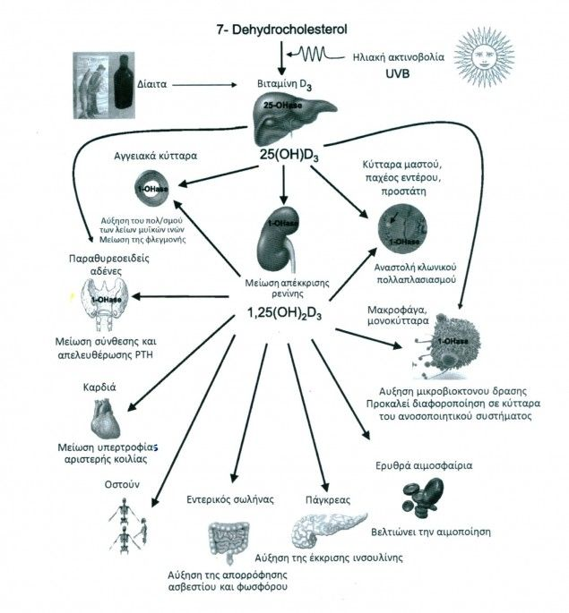vitamini-d3-meionei-tin-pithanothita-emfanisis-17-eidon-karkinou-kai-allon-astheneion1