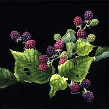 Blackberries on Black, by Caren Heine