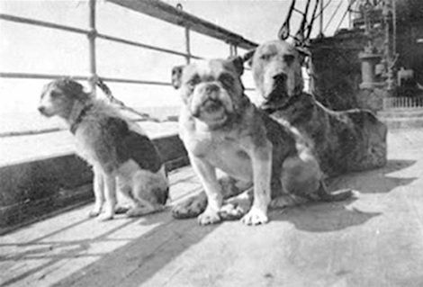 Remembering The Dogs of The Titanic | The Dogington Post