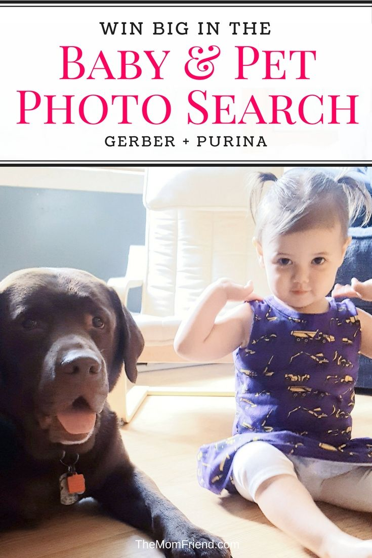 Have a cute pet and baby?  Head over to Instagram and post a picture of your baby (up to 48 months) and pet 🐶 together, and include the hashtags #GerberPhotoSearch2017 & #GerberGigglesandWiggles for your chance to be one of 6 weekly winners who will receive a year supply of both @Gerber baby food and @Purina pet food plus $500!  For official rules see http://cbi.as/a0ld #GigglesandWiggles #ad