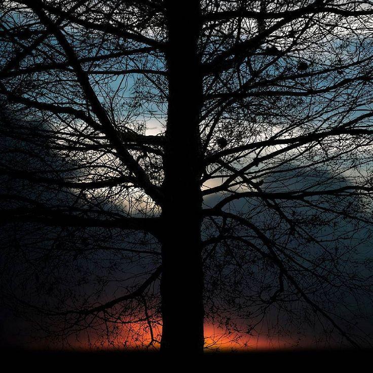 #landscape #landscapelovers #sky #nature #naturelovers #nationalgeographic #tree_magic #tree_brilliance #tree #sunset