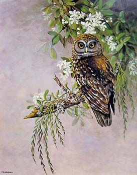Magnificent Morepork by Jeanette Blackburn for Sale - New Zealand Art Prints