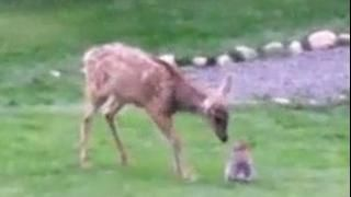 Bambi and Thumper :)