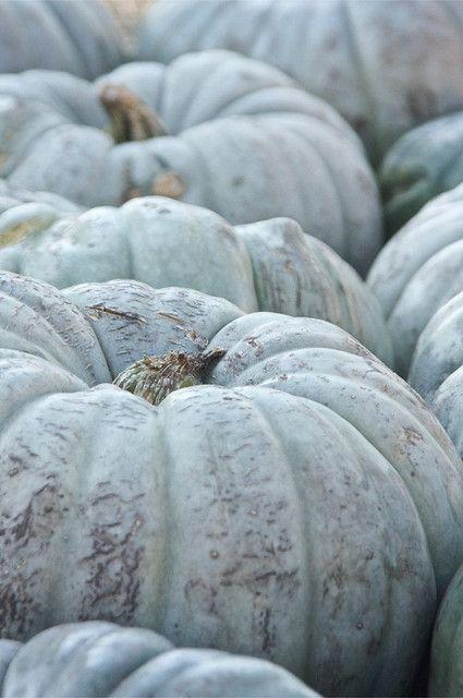Pumpkins. I love the green ones !!
