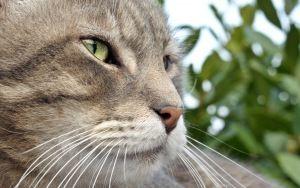 Просмотреть обои кот, морда, полосатый, усы, нос