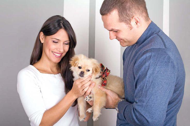 La Generación Millennial en México está optando por una tendencia que incluye un nuevo modelo de familia: perros y amigos. Y eligen estilos de vida como el co-housing (covivienda), el cual destaca por